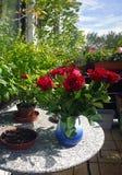 Rote Rosen im Vase auf der Balkontabelle Stockfotos