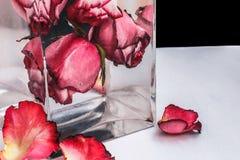 Rote Rosen im Wasser auf schwarzem Hintergrund Lizenzfreie Stockbilder