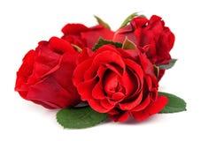 Rote Rosen lokalisiert stockbilder