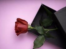 Rote Rosen mit Geschenkbox auf rosa Papier lizenzfreie stockfotos