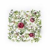 Rote Rosen oder Ranunculus und Grünblätter auf weißem Hintergrund Stockbild