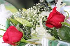 Rote Rosen und Stockfotos
