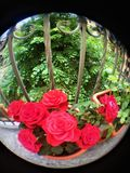 Rote Rosen und Balkon Lizenzfreies Stockbild