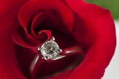 Rote Rosen und Eheringe Lizenzfreies Stockfoto