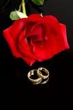 Rote Rosen-und Hochzeits-Ringe Stockbilder