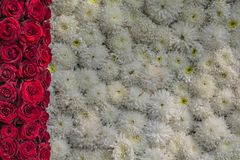 Rote Rosen-und weiße Blumen-Hintergrund stockfotos