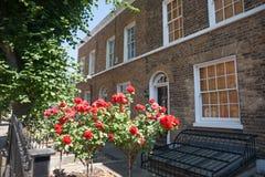 Rote Rosen vor Häusern. Stockbild