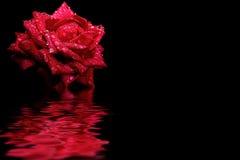 Rote Rosenwasserreflexion Lizenzfreies Stockfoto