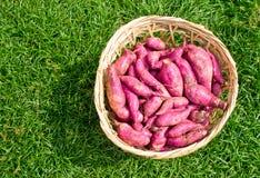 Rote süße Kartoffeln stockfotografie