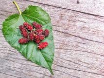 Rote süße reife Maulbeergruppe auf grünem Urlaub Stockfotografie