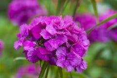 Rote schöne Blume Lizenzfreies Stockbild