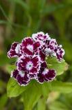 Rote schöne Blume Lizenzfreie Stockfotografie