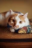 Rote schöne Katze, die auf weichem Kissenentspannung liegt Lizenzfreie Stockfotografie