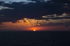 Rote Scheibe der Sonne. Seesonnenuntergang. Stockbilder