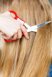 Rote Scheren auf blondem Haar Abschluss oben Stockfoto