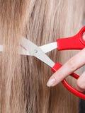 Rote Scheren auf blondem Haar Abschluss oben Stockbilder