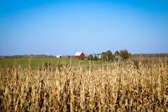 Rote Scheune über einem Feld von getrockneten cornstalks lizenzfreies stockfoto