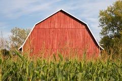 Rote Scheune hinter hohem Mais Lizenzfreies Stockfoto