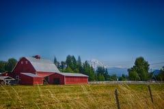 Rote Scheune mit dem Mount Rainier Stockbild
