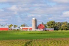 Rote Scheune und Gebäude mit Mais-Feld-Vordergrund Lizenzfreies Stockfoto