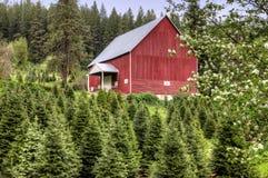 Rote Scheune und grüne Bäume. Stockfotografie