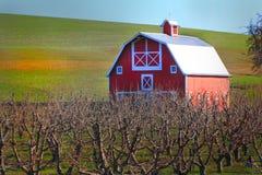 Rote Scheune und Obstgarten Stockbild