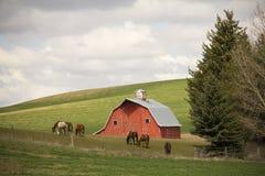 Rote Scheune und Pferd in Washington Stockfotografie