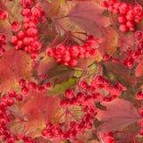 Rote Schneeballbaumbeere und nahtloses Muster der Blätter Stockfotografie