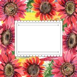 Rote Sonnenblume Botanische mit Blumenblume Feldgrenzverzierungsquadrat Lizenzfreie Stockbilder