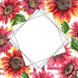 Rote Sonnenblume Botanische mit Blumenblume Feldgrenzverzierungsquadrat Lizenzfreie Stockfotografie