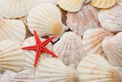 Rote Starfish über Hintergrund der Seeshells Lizenzfreies Stockbild