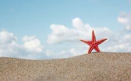 Rote Starfish auf Sand Lizenzfreie Stockbilder