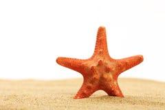 Rote Starfish, die im Meersand auf weißem Hintergrund stehen Lizenzfreie Stockbilder