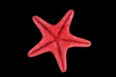 Rote Starfish getrennt auf Schwarzem Stockbilder