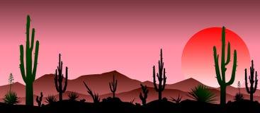 Rote steinige Wüste, Kakteen, Sonnenuntergang lizenzfreie abbildung