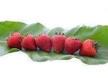 Rote strawberrys Stockbild