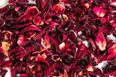 Rote Teehintergrundbeschaffenheit Stockfotos