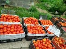 Rote Tomate lizenzfreies stockfoto