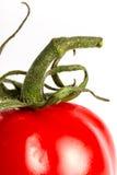 Rote Tomate Stockfotos
