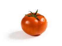 Rote Tomate auf weißem Hintergrund Stockbilder