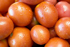 Rote Tomaten. Lizenzfreie Stockfotos
