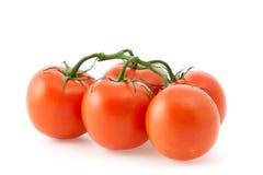 Rote Tomaten auf einer Niederlassung Stockbilder