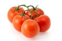 Rote Tomaten auf einer Niederlassung Lizenzfreies Stockfoto