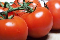 Rote Tomaten auf einer Rebe Lizenzfreie Stockfotografie