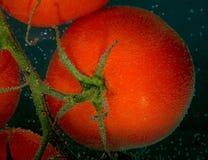 Rote Tomaten mit Luftblase auf einer Oberfläche auf grauem Hintergrund Stockfotografie