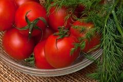 Rote Tomaten und Dill lizenzfreie stockfotografie
