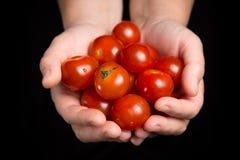 Rote Tomatenkirsche in den Frauenhänden auf schwarzem Hintergrund lizenzfreie stockbilder