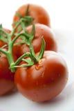 Rote Tomatereihe Stockbild