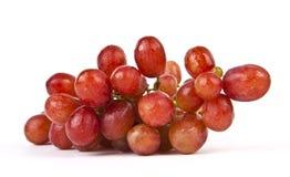 Rote Trauben. Stockfoto