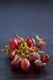 Rote Trauben auf der Rebe Stockfotografie